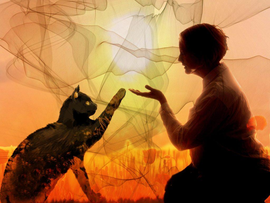 Kissa ojentaa tassunsa koskettaakseen naisen lähestyvää kättä